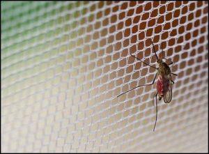comprar mosquiteras a medida