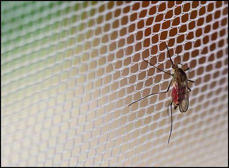 Comprar mosquiteras a medida una protecci n ligera y for Mosquiteras fijas a medida